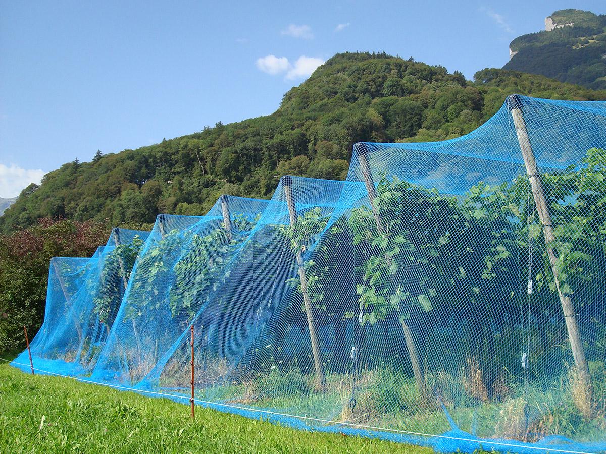 Vogelschutz Netz